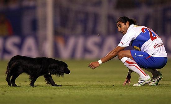 El jugador de Universidad Católica Juan Eluchans trata de sacar un perro de la cancha/EFE