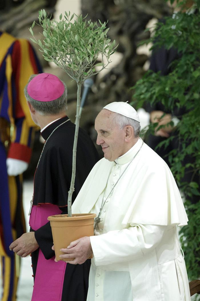 El papa Francisco sostiene un olivo durante su encuentro con futbolistas que participarán en el
