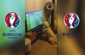 Eurocopa 2016: este perro no se pierde ni un partido del torneo